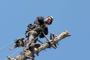 Grassmann Baumpflege - Bei schwierigen Fällungen auf Nummer sicher gehen! (c) Martin S.
