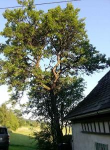 Baum gebäudenah: Äste hängen über das Dach. Sicher oder gefährlich?