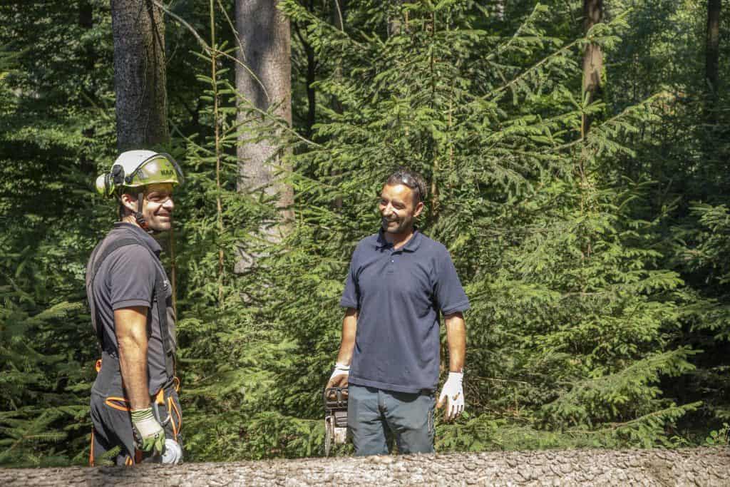 Grassmann Baumpflege Waldarbeit